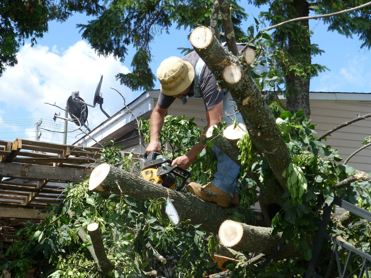 this is an image of tree removal in whittier