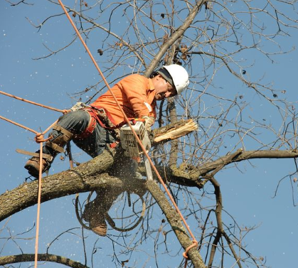 this is an image of tree removal in tree removal
