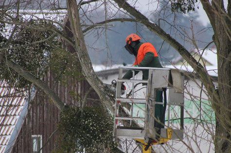 this is an image of tree service in whittier