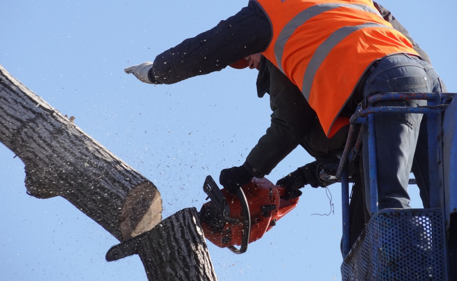 this is an image of tree trimming in whittier