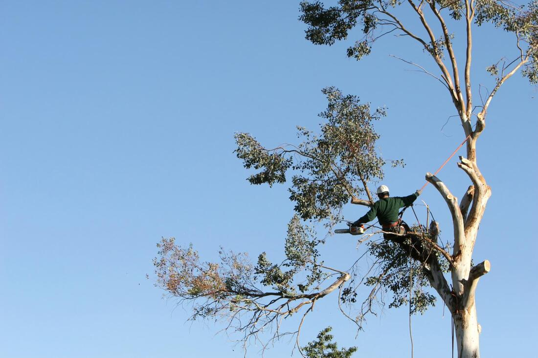 this image shows whittier tree services in california